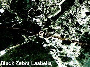 Black Zebra Lasbella